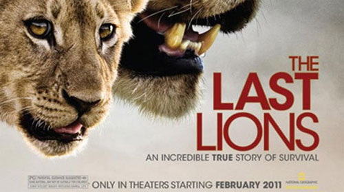 rip The Last Lions DVD with Magic DVD Ripper